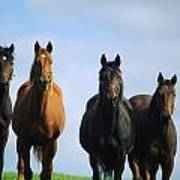 Ireland Thoroughbred Yearlings Art Print