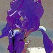 Iris 37 Art Print
