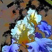 Iris 41 Art Print
