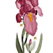 Iris II In Full Color Art Print