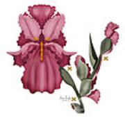 Iris IIi  Art Print by Anne Norskog