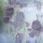 Iris In The Spring Rain Art Print