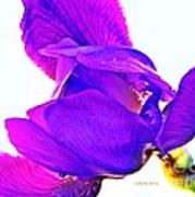 Iris Surprise  Art Print