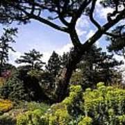 Irish National Botanic Gardens, Dublin Art Print