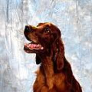 Irish Red Setter Art Print