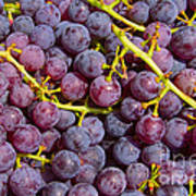 Italian Red Grape Bunch Art Print