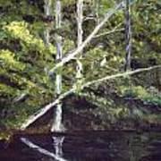 Jackson Bluff On The Waccamaw River Art Print