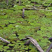 January Lake Lily Pad Art Print