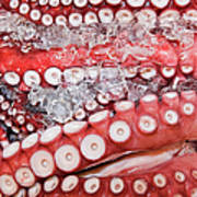 Japan, Tokyo, Tsukiji Fish Market, Close-up Of Octopus In Ice Art Print