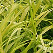 Japanese Forest Grass Art Print