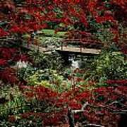 Japanese Garden, Through Acer In Art Print