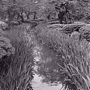 Japanese Garden With Irises Art Print