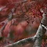 Japanese Maple Blur Art Print