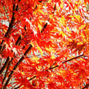 Japanese Maple Leaves 12 In The Fall Art Print