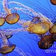 Jellyfish 6 Art Print