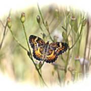 Jewel In The Marsh Art Print