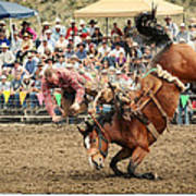 Jordan Valley Arena Action Ranch Bronc 2012 Art Print