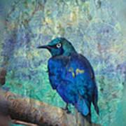 Josh's Blue Bird Art Print