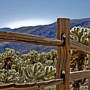 Joshua Tree Cholla Garden Art Print