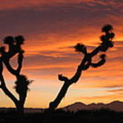 Joshua Trees In The Sunset Art Print