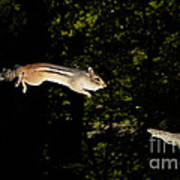 Jumping Chipmunk Art Print