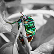 Junebug Art Print