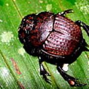 Jungle Beetle Art Print