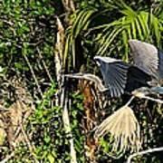 Jungle Flight Art Print