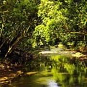 Jungle Stream Below The Secret Art Print