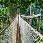 Jungle Walk From High Above Art Print