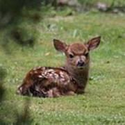 Just Born Bambi Art Print