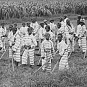 Juvenile Convicts At Work In The Fields Art Print by Everett