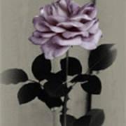 Kathleen's Garden Rose Art Print