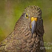 Kea Parrot Art Print