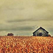 Kentucky Corn Field Art Print