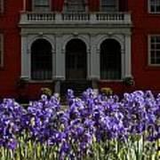 Kew Garden Irises Art Print