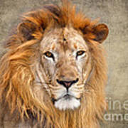 King Of Beasts Portrait Of A Lion Art Print