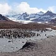 King Penguin Breeding Colony Art Print