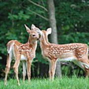 Kiss Me Deer Art Print
