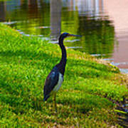 Kissimmee Pond Bird Art Print