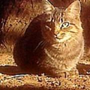 Kit Kat Art Print