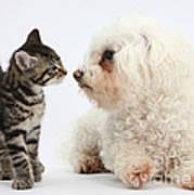 Kitten & Pup Confrontation Art Print