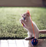 Kitten Catches Feather Toy Art Print