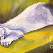 Kitten Dream Art Print