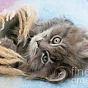 Kitten In Blanket Art Print