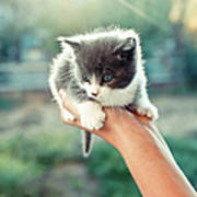 Kitten In Hand, 2010 Art Print