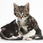 Kitten Pals Art Print