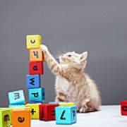 Kitten Playing With Building Blocks Art Print