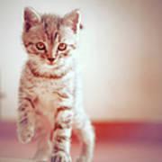 Kitten Walking On Floor Print by Alberto Cassani
