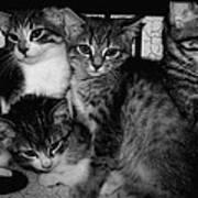 Kittens Corner Print by Christy Leigh